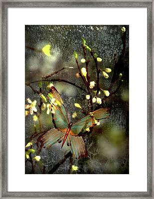 Morning's Moth On Apple Blossom Framed Print by Li   van Saathoff
