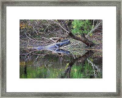 Morris Bridge Gator Framed Print