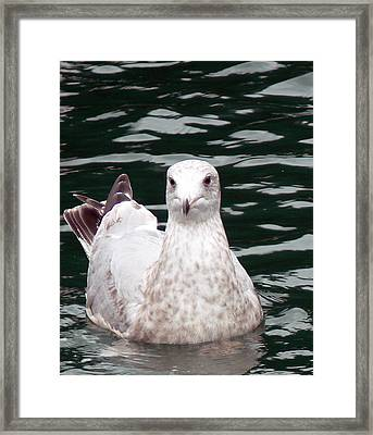 Mortimer Waiting Framed Print