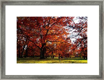 Morton Arboretum In Colorful Fall Framed Print by Paul Ge