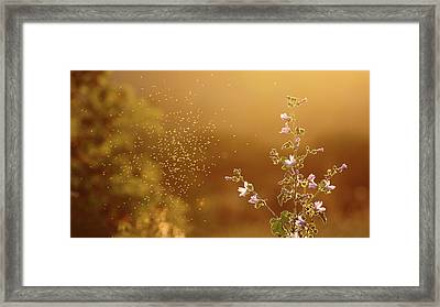 Mosquito Around Flowers Framed Print