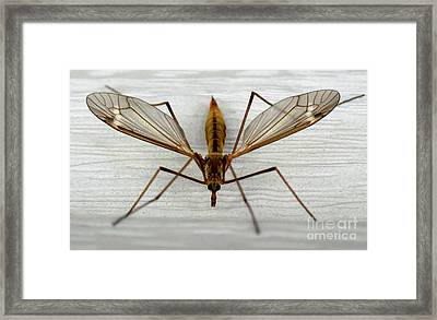Mosquito Hawk Framed Print by The Kepharts