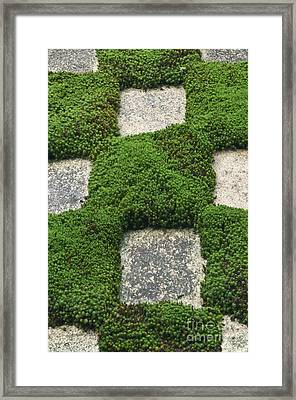 Moss And Stepping Stones Framed Print by Rob Tilley