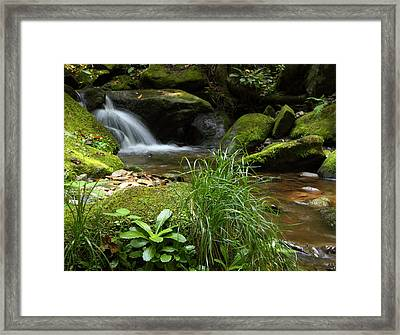 Moss And Water And Ambience Framed Print by Andrew McInnes