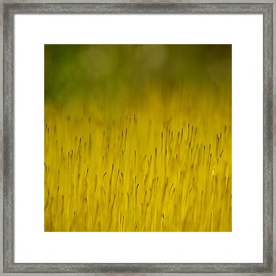Moss In Yellow Framed Print