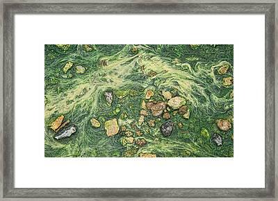 Framed Print featuring the photograph Moss Mustache  by Britt Runyon