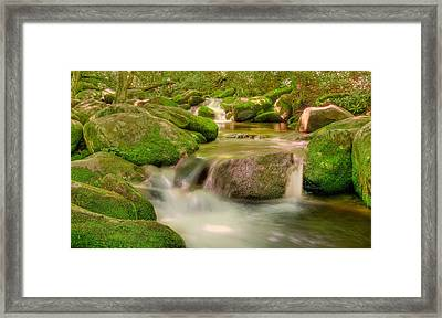 Mossy Beauty Framed Print by Cindy Haggerty