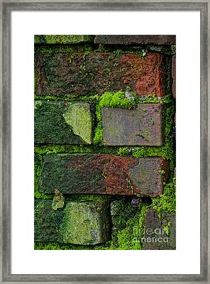 Mossy Brick Wall Framed Print by Carol Ailles