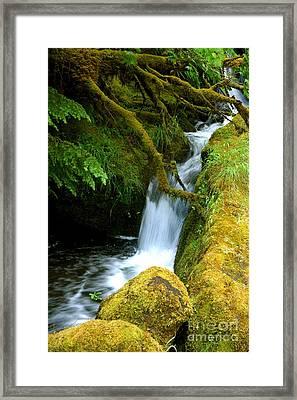 Mossy  Framed Print