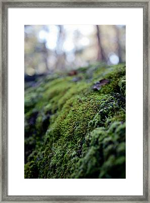 Mossy Log Framed Print