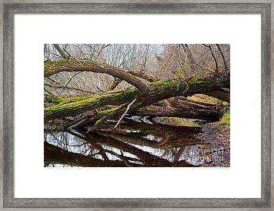 Mossy Tree Framed Print by Ms Judi