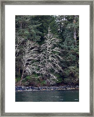 Mossy Trees Framed Print by Jim Moore
