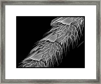 Moth Antennae  Framed Print by Sheri  Neva