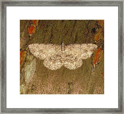 Moth Framed Print by Bruce Carpenter
