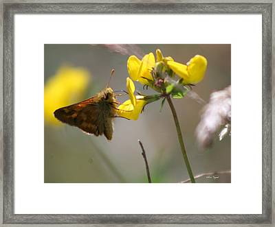 Moth Life Framed Print