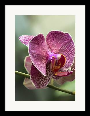 Orchid Cactus Framed Prints