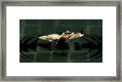 Framed Print featuring the photograph Moth Ripples by Jessica Shelton