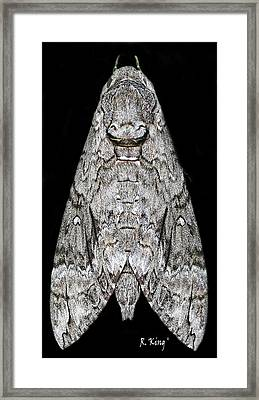 Framed Print featuring the photograph Moth by Roena King