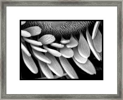 Moth Scales Framed Print