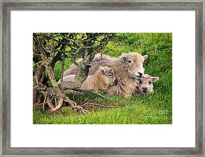 Mother And Babies Framed Print by Jason Connolly