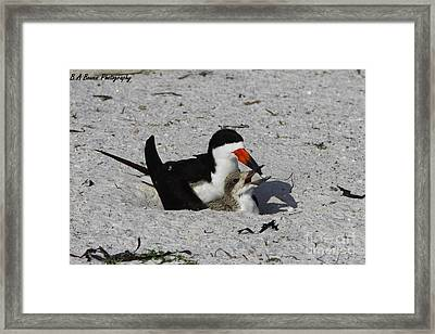 Mother And Baby Black Skimmer Framed Print by Barbara Bowen