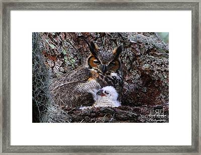 Mother And Baby Owl Framed Print by Barbara Bowen
