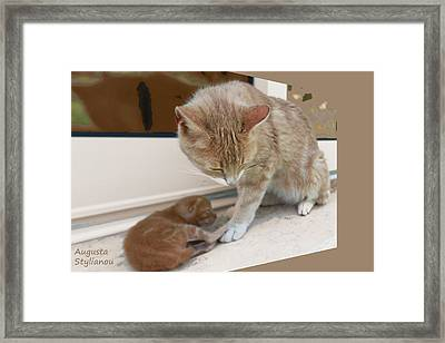 Mother And Kitten Framed Print by Augusta Stylianou