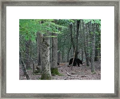 Mother Bear And Cub In Woods Framed Print by Kathy Long