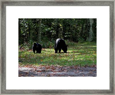 Mother Bear And Cub Framed Print by Kathy Long