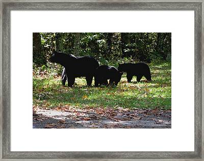 Mother Bear And Three Cubs Framed Print by Kathy Long