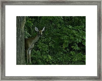 Mother Deerest Watching Her Fawn Framed Print