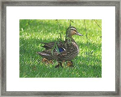 Mother Duck And Ducklings Under The Willow Tree Framed Print by Jeanne Kay Juhos