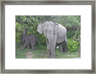 Mother Elephant And Baby Framed Print
