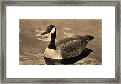 Mother Goose Framed Print by Sergio Aguayo