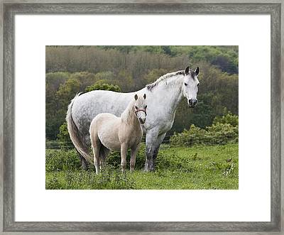 Mother Horses And Baby Horses Framed Print by DSW Creative Photography