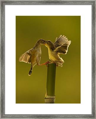 Mother Love Framed Print by Photowork by Sijanto