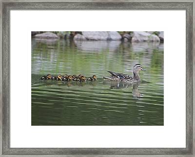 Mother Mallard And Ducklings Framed Print by Jeanne Kay Juhos