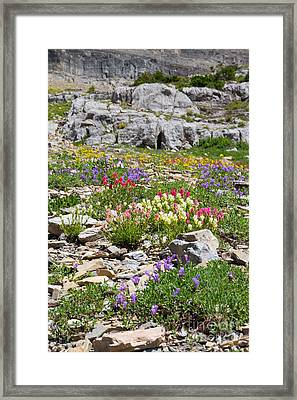 Framed Print featuring the photograph Mother Nature's Master Garden 4 by Katie LaSalle-Lowery