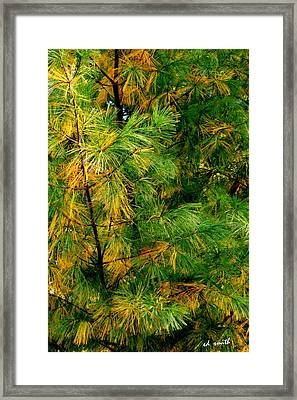 Mother Natures Needle Work Framed Print by Ed Smith