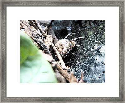 Mother Spider Framed Print