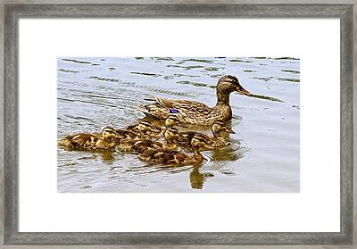 Framed Print featuring the photograph Mothers Day by Susi Stroud