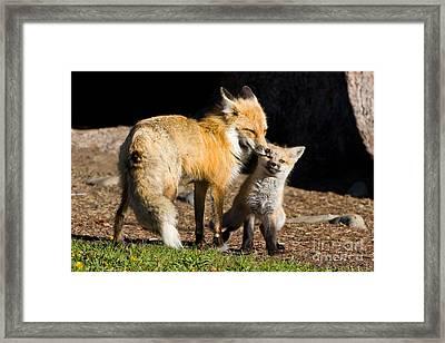 Mothers Love Framed Print by Danny  Nestor