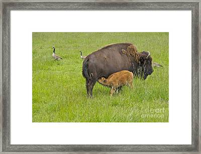 Mother's Milk Framed Print by Sean Griffin