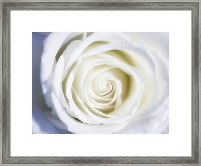 Mother's White Rose Framed Print by Linda Dunn
