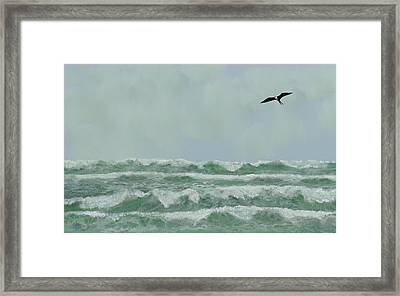 Motion And Flight Framed Print by Tony Rodriguez
