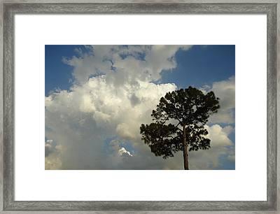Mottled Clouds And Scrub Pine Framed Print by Debbie Wassmann