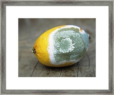 Mouldy Lemon Framed Print