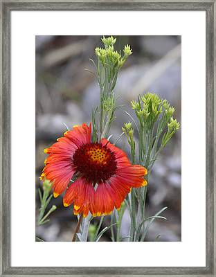 Mount Charleston Wildflowers Framed Print by Sandra Welpman