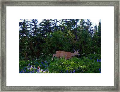 Mount Rainier Deer Framed Print