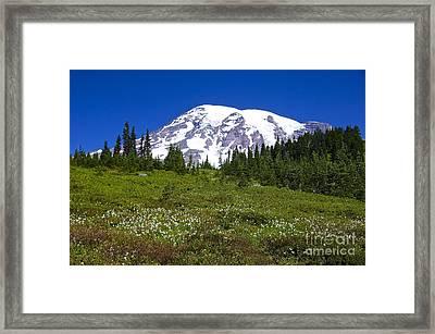 Mount Rainier In Summer Framed Print by Sean Griffin